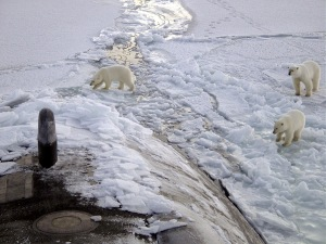 Polar bears explore a surfaced U.S. submarine in the Arctic. U.S. Navy photo. (Click on the image to enlarge)