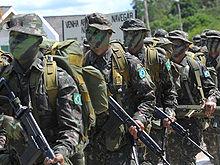 brazilian-jungle-trained