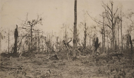 Belleau Wood shattered trees 1918